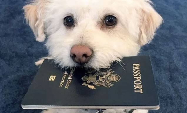 travel abroad with your pet.